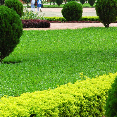 גנן דשא